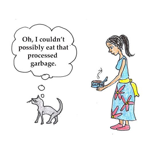 cat refusing food