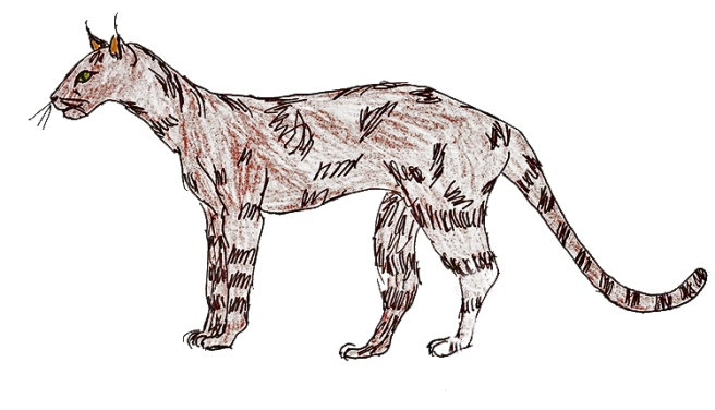 felidae evolution